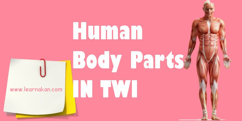 human body parts in twi